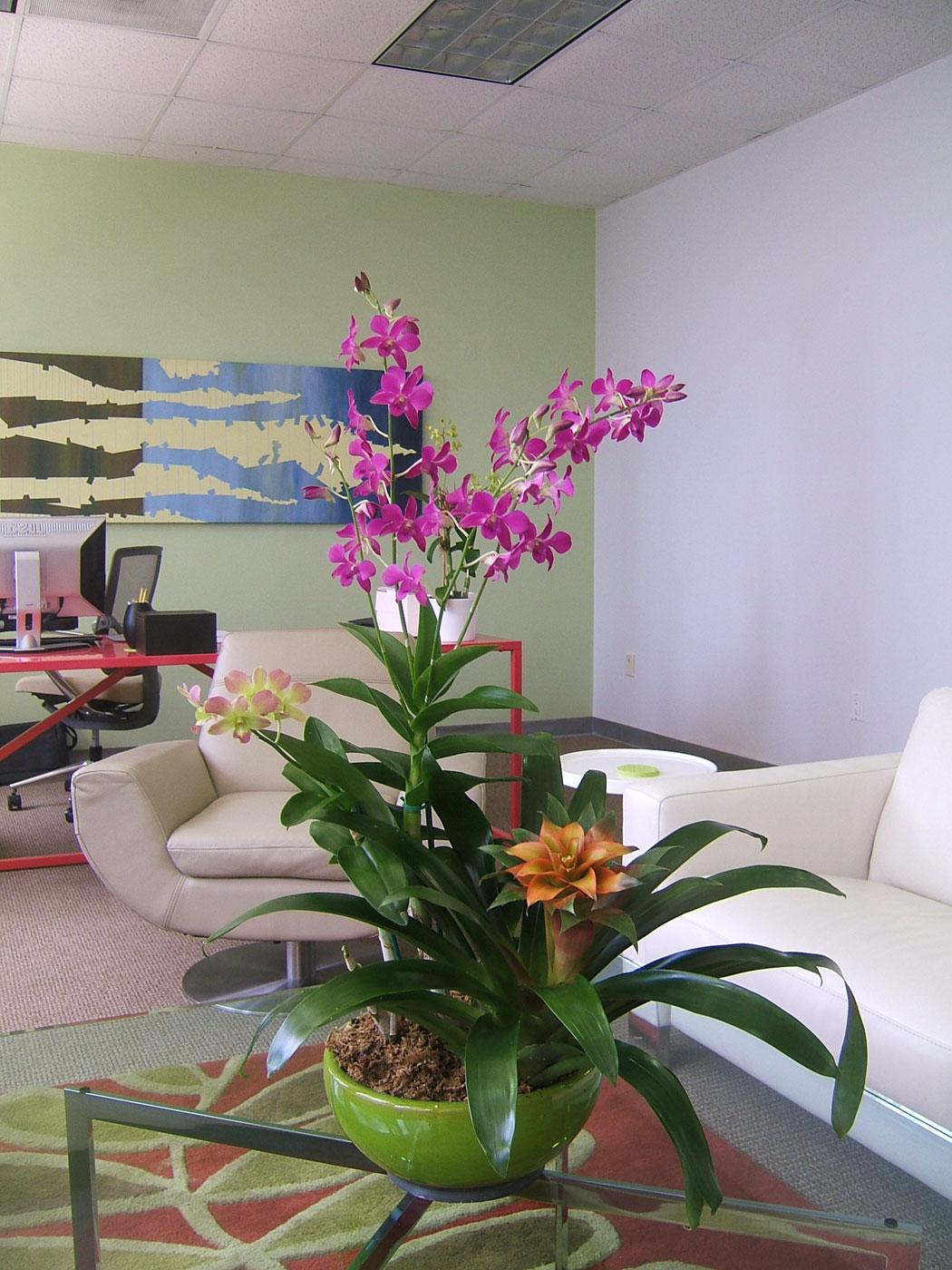 Add exotic vibes with Bromeliads