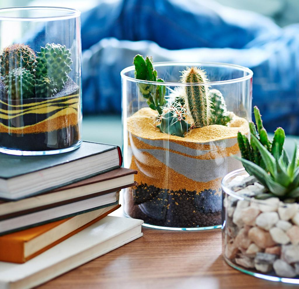 Accentuate specific furniture pieces with succulents