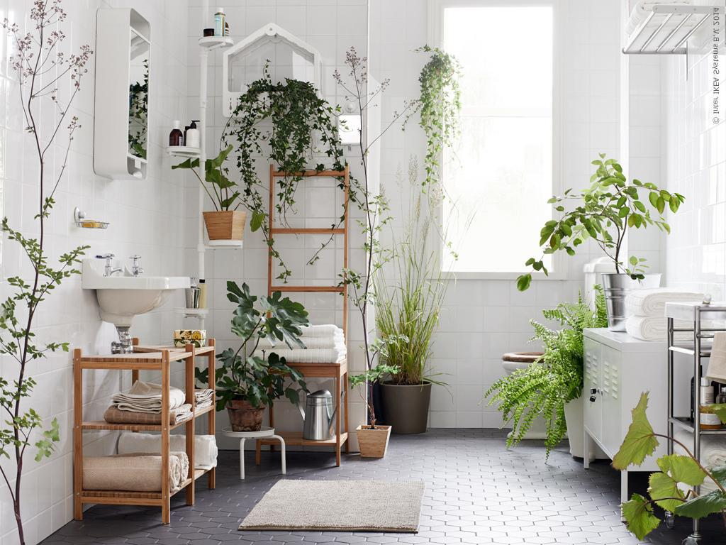 Decorating our homes with plants interior design explained Interior design plants inside house