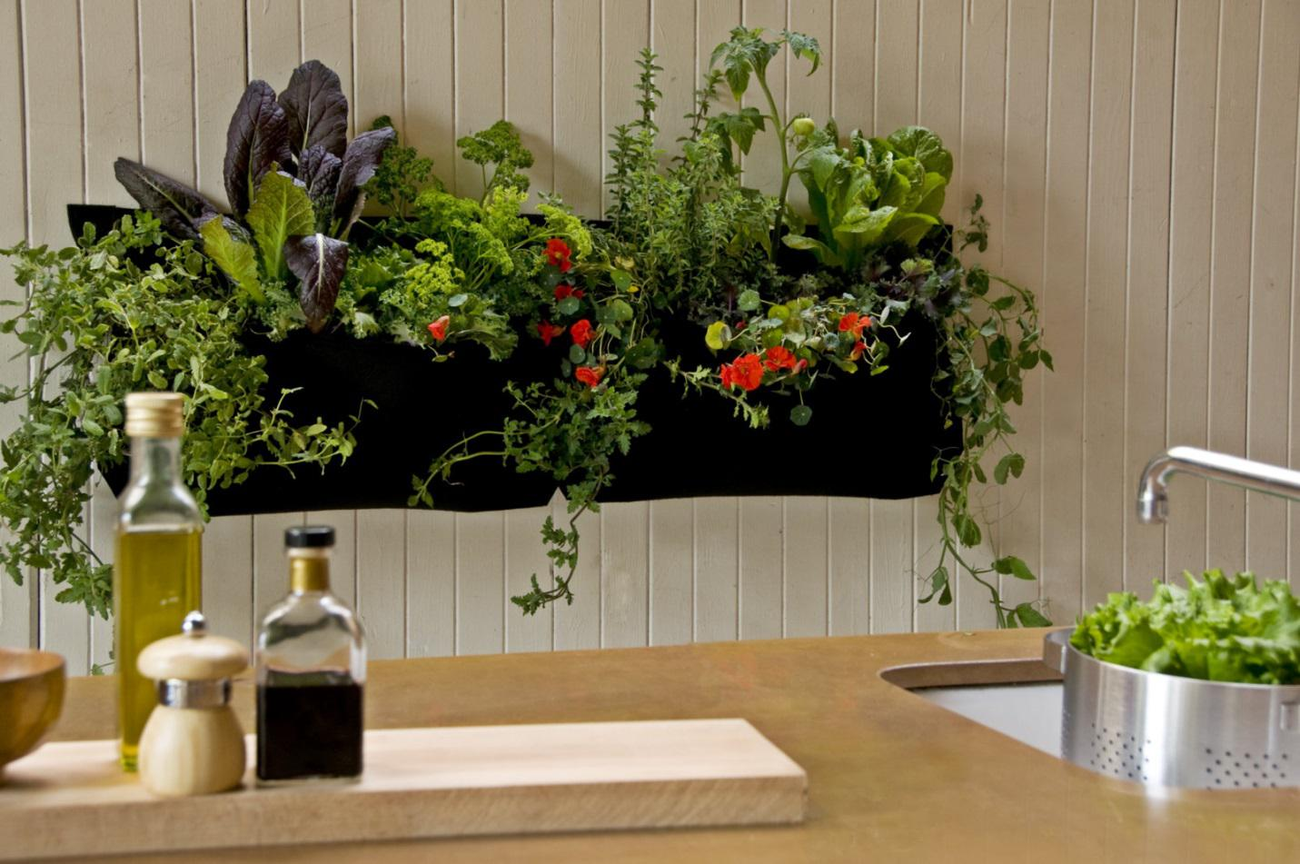 Kitchen plants decor